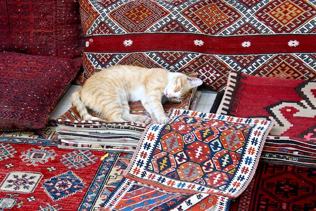 cat on a killim, Istanbul, Turkey (Eat Me. Drink Me.)