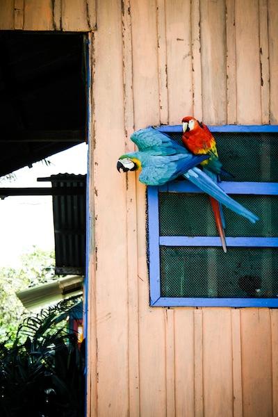 Parrots (Eat Me. Drink Me.)