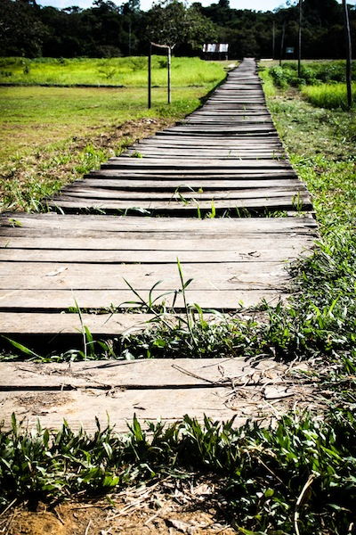 A walkway in the Amazon (Eat Me. Drink Me.)