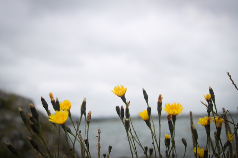 Yellow flowers on a stormy day (Eat Me. Drink Me.)