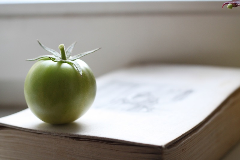 A meditative little green tomato (Eat Me. Drink Me.)