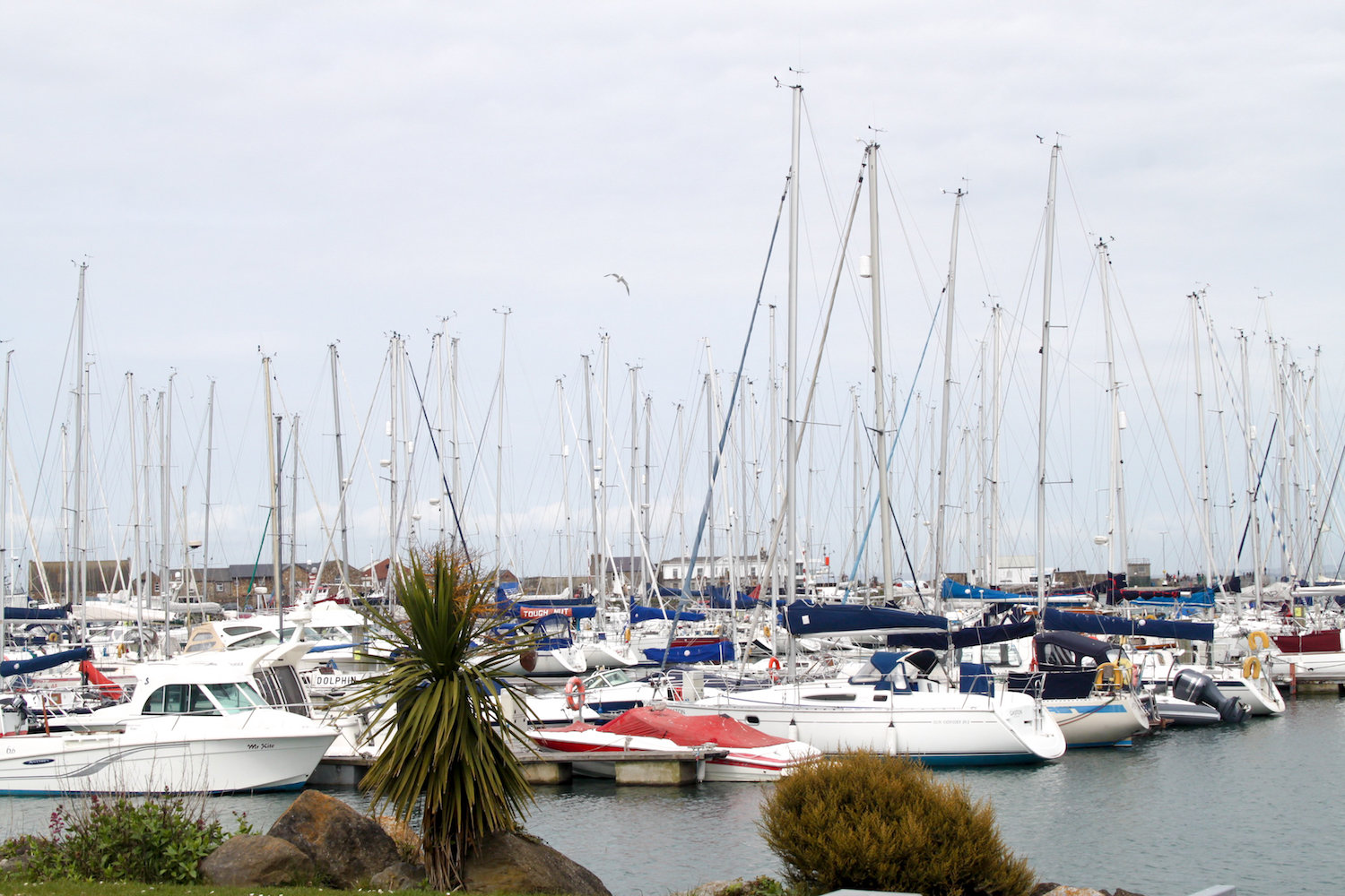 Boats in Howth harbor (Eat Me. Drink Me.)
