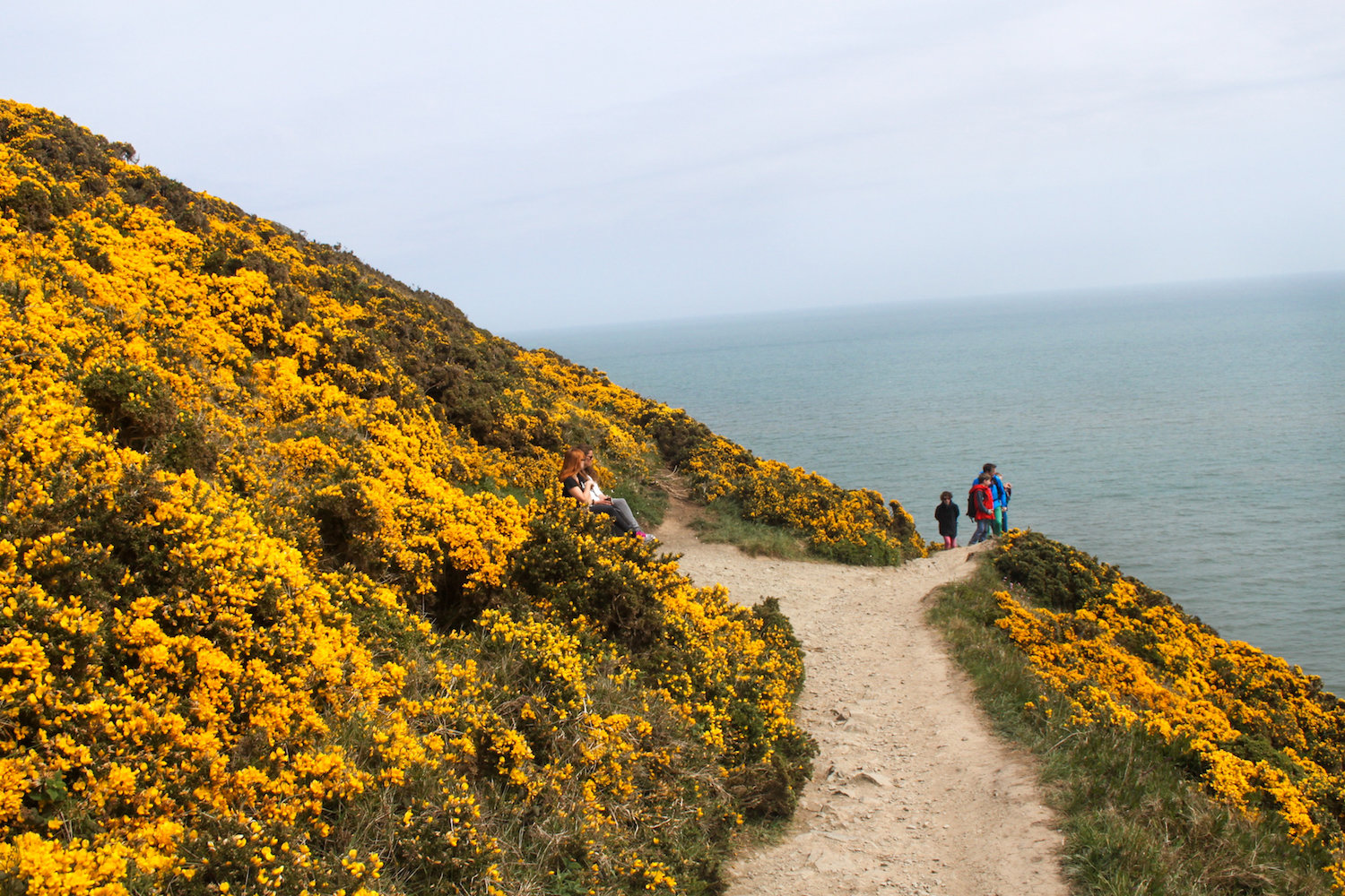 Trail along the cliffs of Howth (Eat Me. Drink Me.)