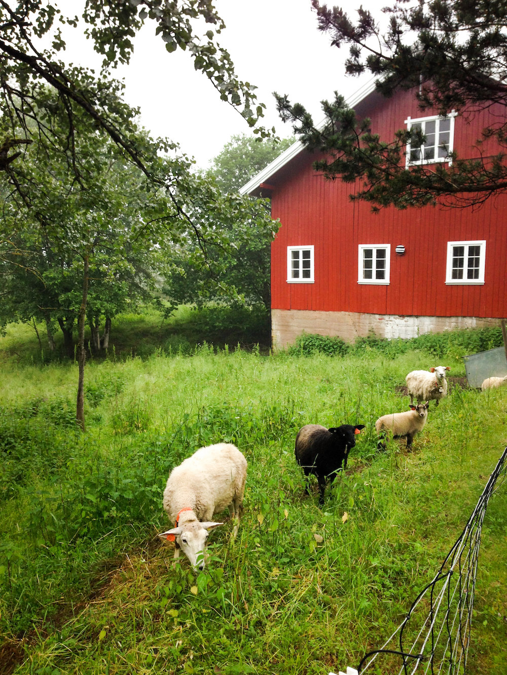 Farmhouse and sheep (Eat Me. Drink Me.)
