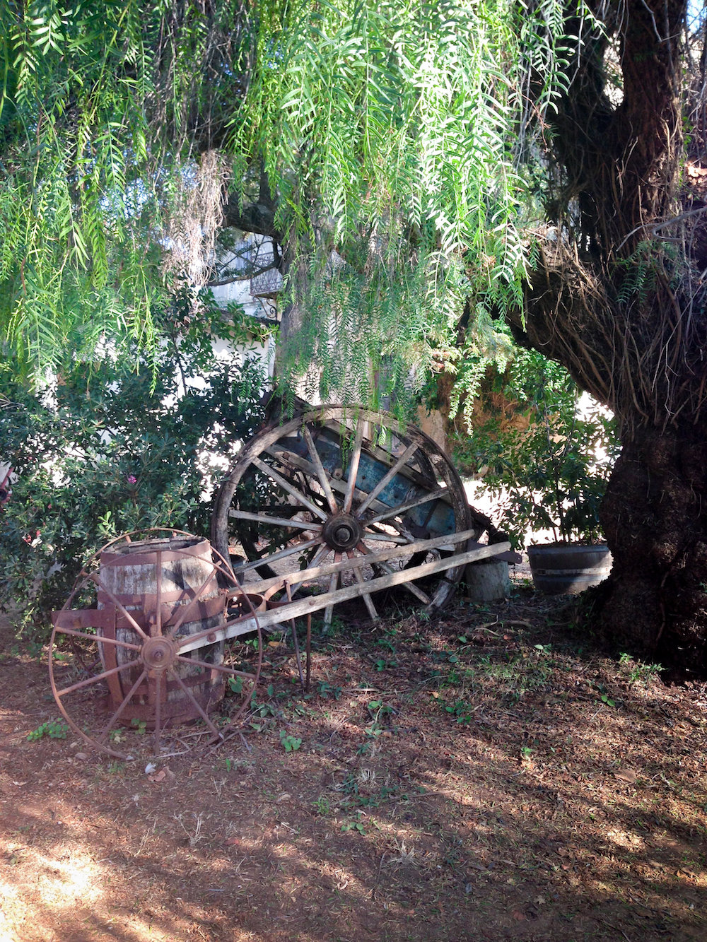 Wheelbarrow and pepper tree (Eat Me. Drink Me.)