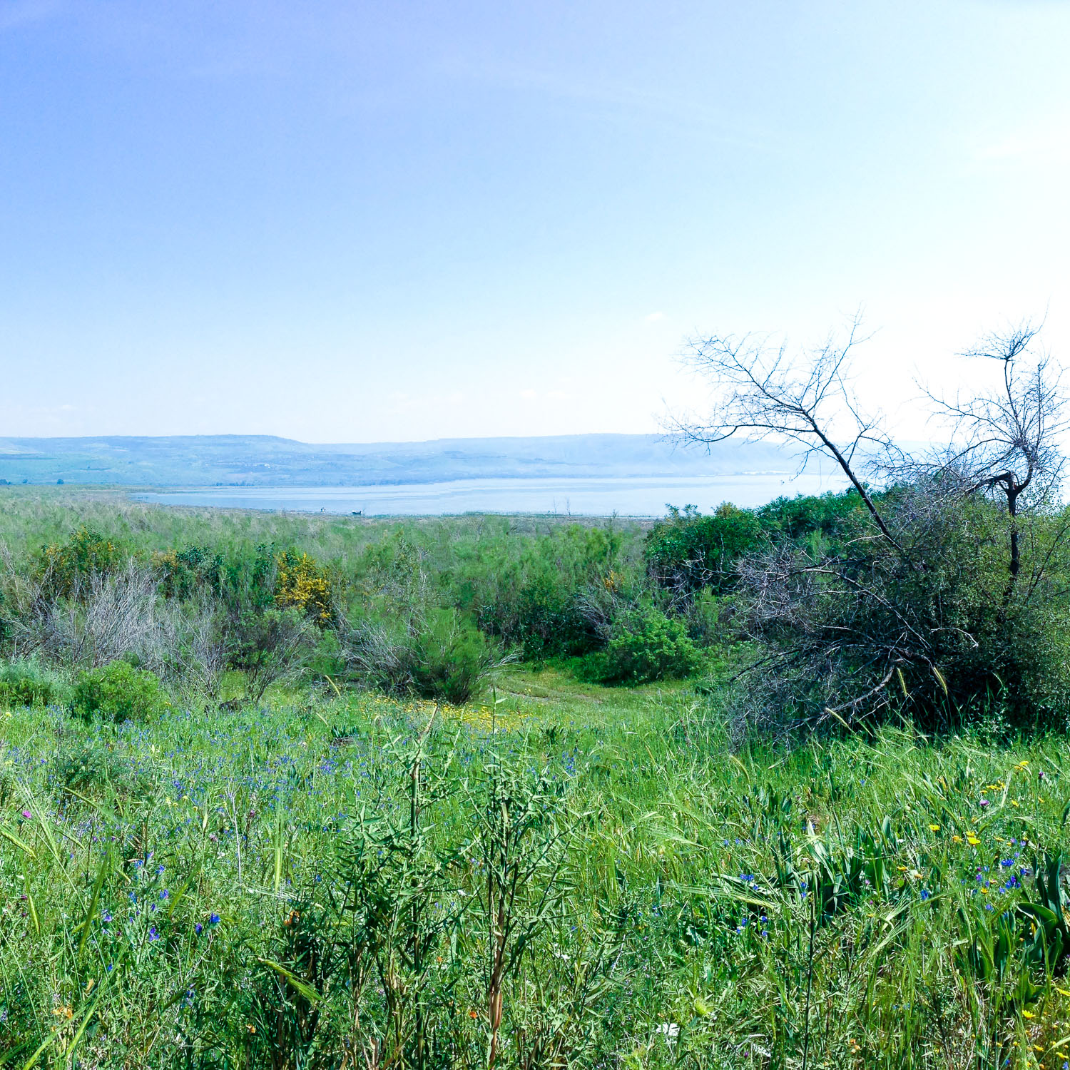 The Sea of Galilee (Eat Me. Drink Me.)