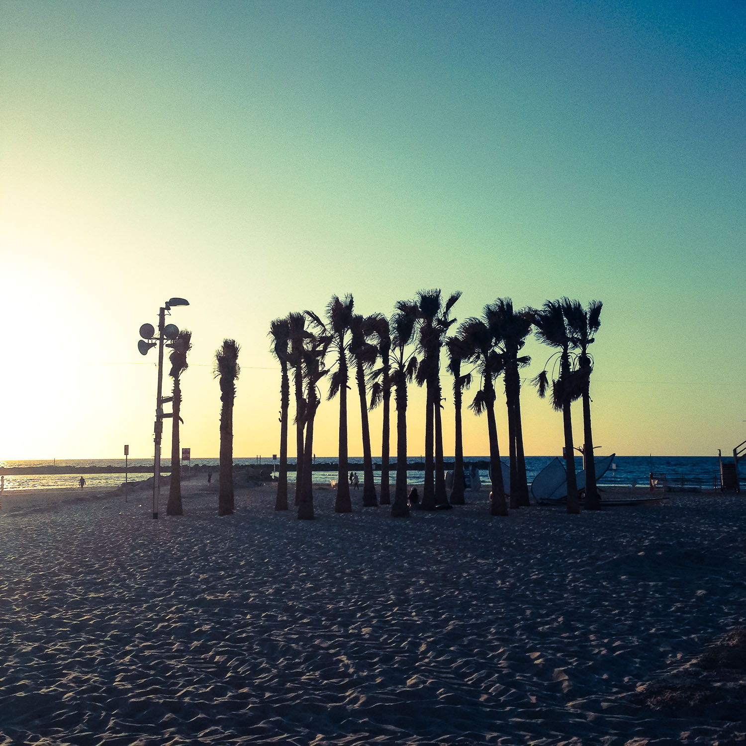 Palms on the beach in Tel Aviv (Eat Me. Drink Me.)