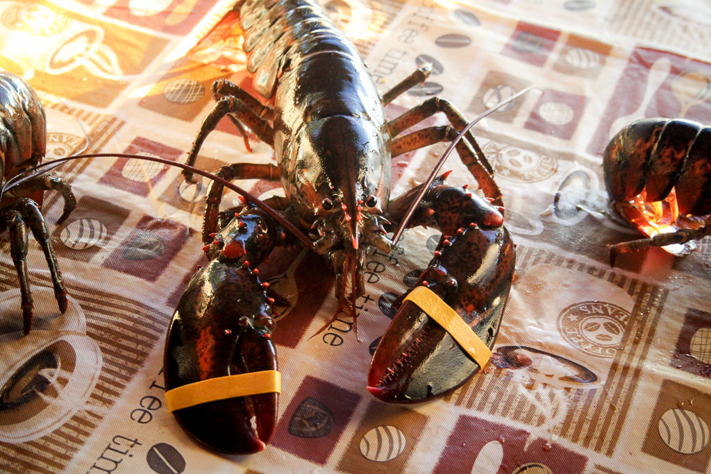 Live lobster (Eat Me. Drink Me.)