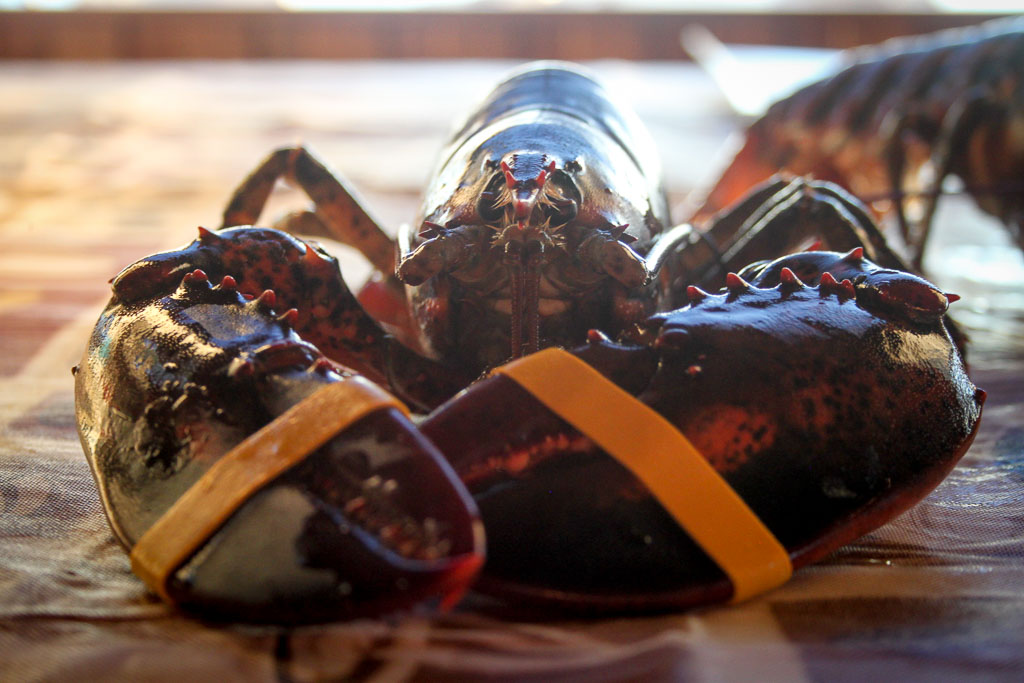 Wise old lobster (Eat Me. Drink Me.)