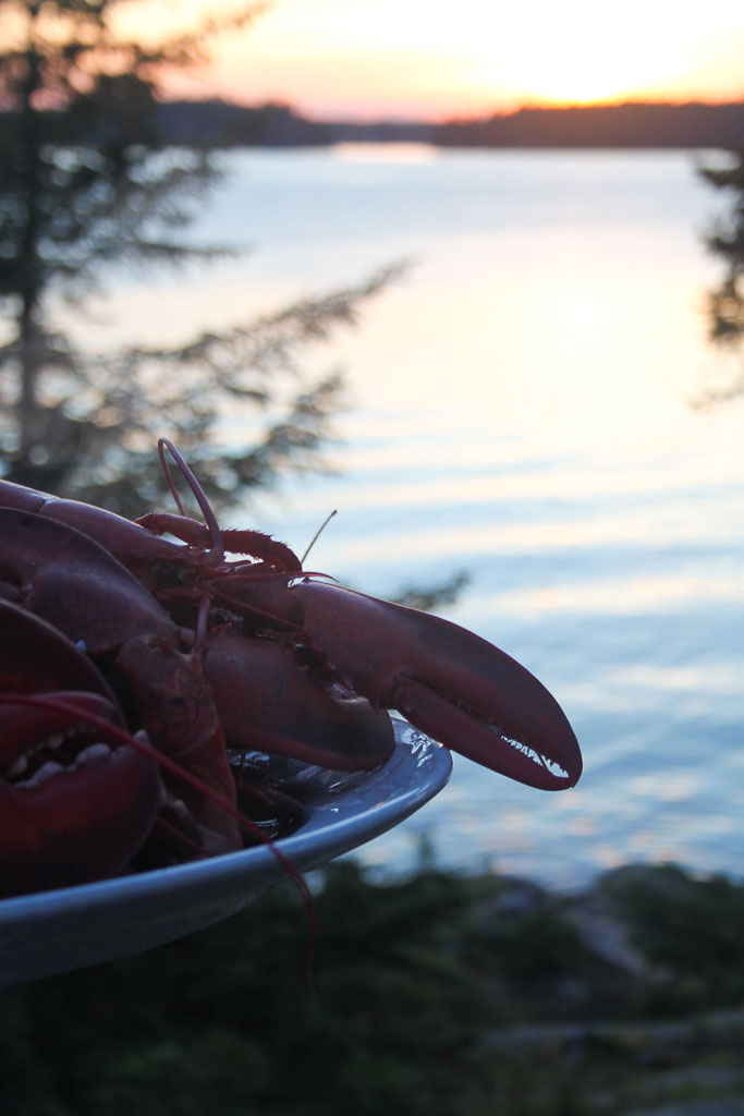 Some lobsters in the evening sun (Eat Me. Drink Me.)