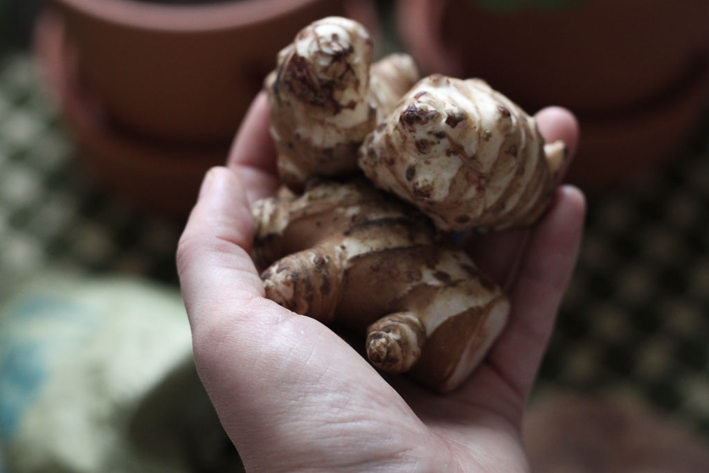 Jerusalem artichokes from the market (Eat Me. Drink Me.)